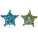 estrella solida de mar